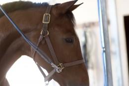 Horse in crossties
