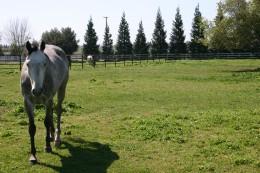 Facilities Pasture 2